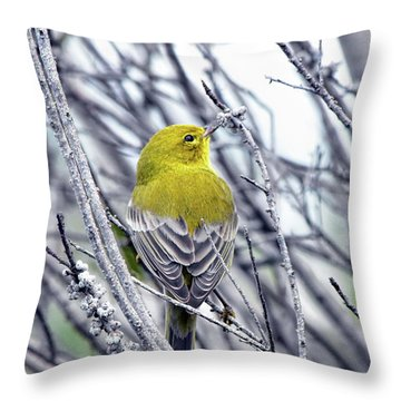 Male Pine Warbler Throw Pillow