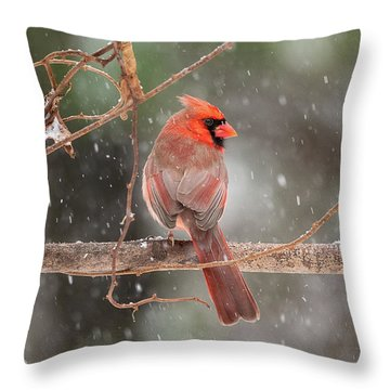 Male Red Cardinal Snowstorm Throw Pillow