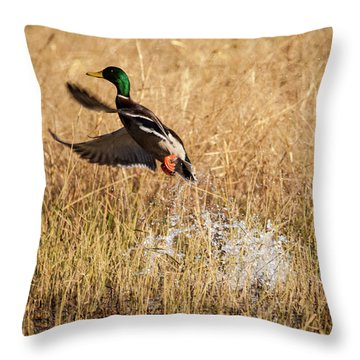 Throw Pillow featuring the photograph Mallard Explosion by Jeff Phillippi