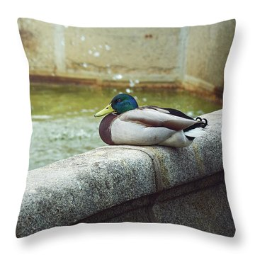 Mallard Resting On The Fountain Of The Fallen Angel In The Retiro Park - Madrid, Spain Throw Pillow
