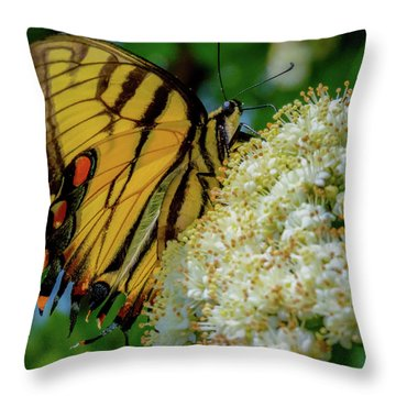 Manassas Butterfly Throw Pillow