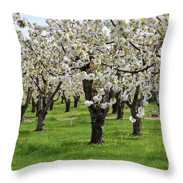 Many Cherry Blossoms In Spring Orchard Throw Pillow