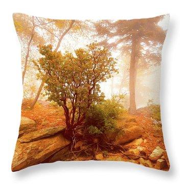 Manzanita In Light Throw Pillow