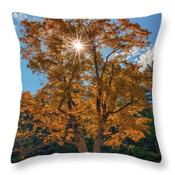Throw Pillow featuring the photograph Maple Tree In Full Autumn Glory by Rick Berk