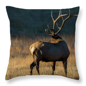 Throw Pillow featuring the photograph ME3 by Joshua Able's Wildlife