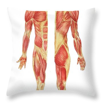 Medical Anatomy Body Muscles Study Posterior Anterior In Watercolor Throw Pillow