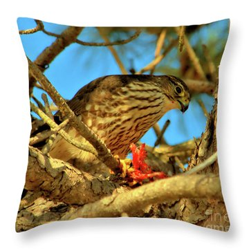 Throw Pillow featuring the photograph Merlin Eating Breakfast by Debbie Stahre