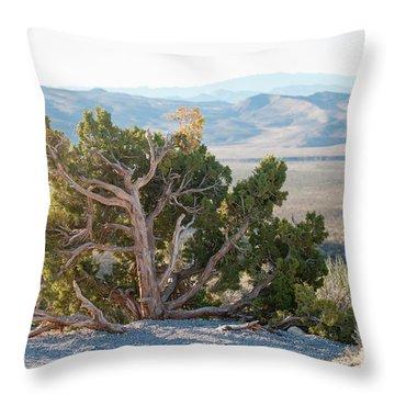 Mesquite In Nevada Desert Throw Pillow