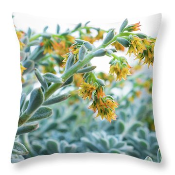 Mexican Echeveria In The  Morning Throw Pillow