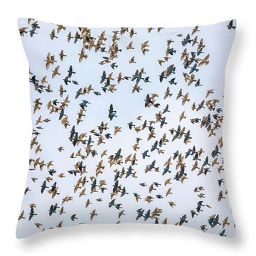 Throw Pillow featuring the photograph Migrations by Dan Sproul