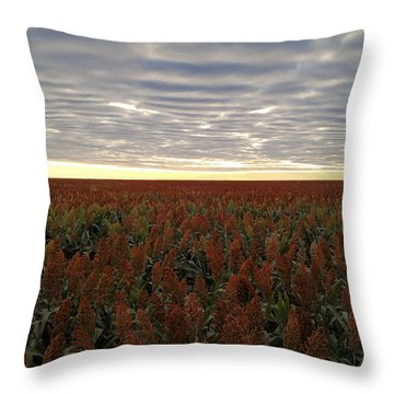 Throw Pillow featuring the photograph Miles Of Milo by Carl Young