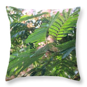 Mimosa Tree Blooms And Fronds Throw Pillow