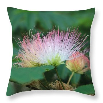 Mimosa Tree In Bloom Throw Pillow