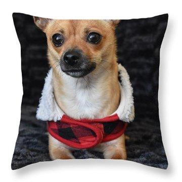 Chihuahua Throw Pillows