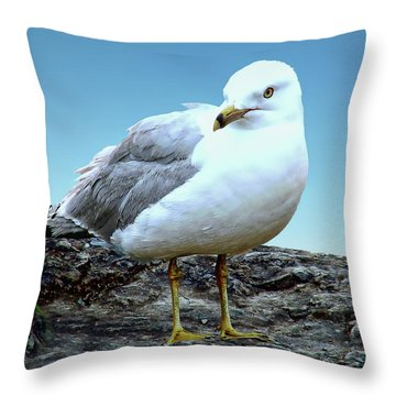 Throw Pillow featuring the photograph Moewe Seagull by Anthony Dezenzio