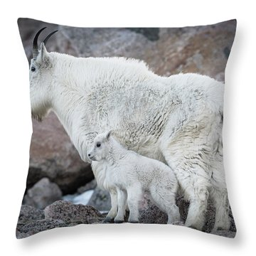 Mom And Baby Mountain Goat Throw Pillow