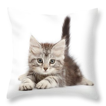 Throw Pillow featuring the photograph Momentary Paws by Warren Photographic