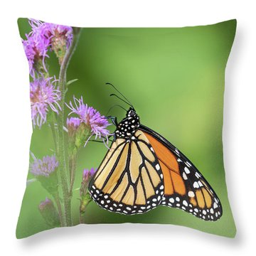 Monarch 2018-21 Throw Pillow