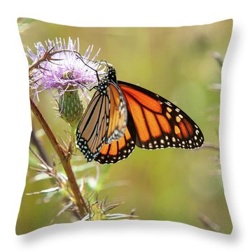 Throw Pillow featuring the photograph Monarch Butterfly On Thistle 2 by Lara Ellis