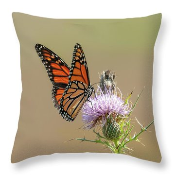 Throw Pillow featuring the photograph Monarch Butterfly On Thistle 3 by Lara Ellis