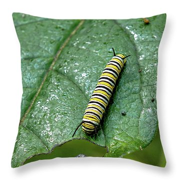 Throw Pillow featuring the photograph Monarch Meal by Lara Ellis