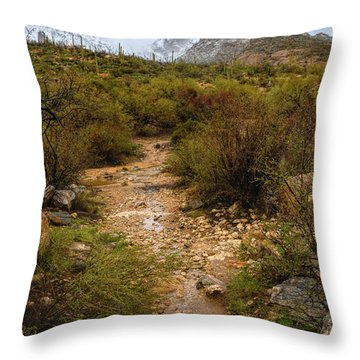 Moody Creekbed  Throw Pillow