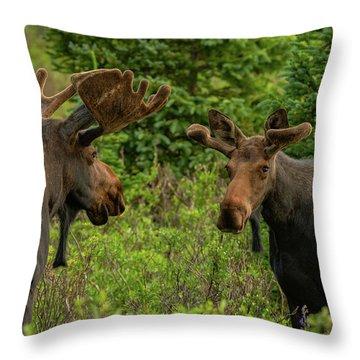 Moose Conversations Throw Pillow