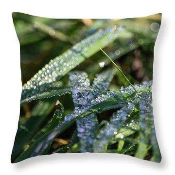 Throw Pillow featuring the photograph Morning Dew On Grass by Scott Lyons