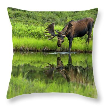 Morning Isolation Throw Pillow