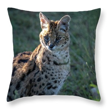 Morning Lit Serval Cat Throw Pillow