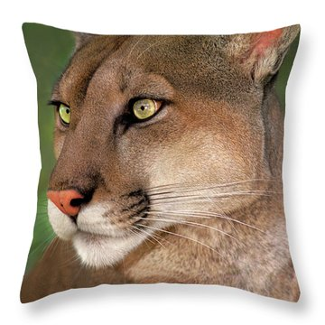 Throw Pillow featuring the photograph Mountain Lion Portrait Wildlife Rescue by Dave Welling