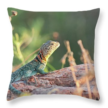 Mountian Boomer Throw Pillow