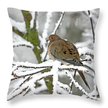 Mourning Dove In Snowstorm Throw Pillow