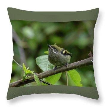 Moustached Tinkerbird Throw Pillow