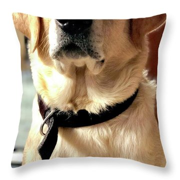 Labrador Dog Home Decor