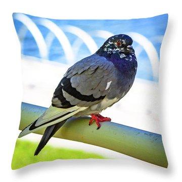 Mr. Pigeon Throw Pillow