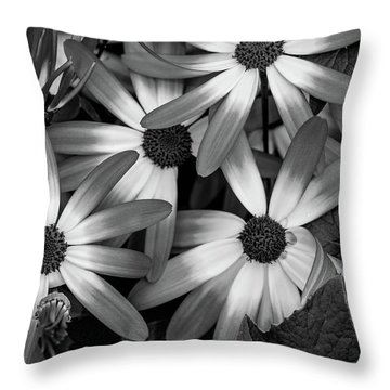 Multiple Daisies Flowers Throw Pillow