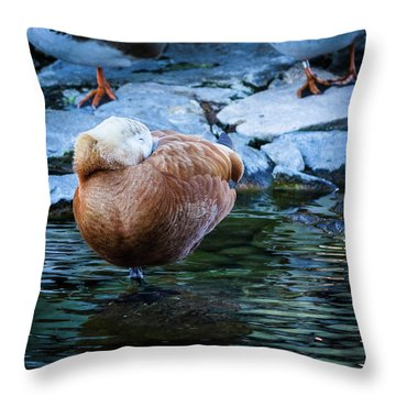 Napping At The Pond Throw Pillow