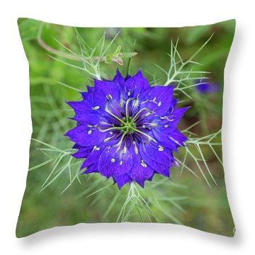 Throw Pillow featuring the photograph Nigella Damascena Flower by Tim Gainey