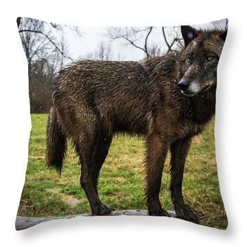 Niko Throw Pillow