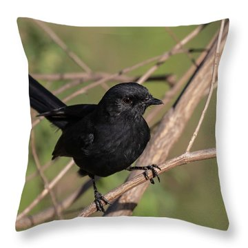 Northern Black Flycatcher Throw Pillow