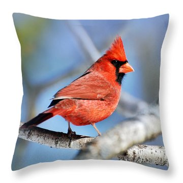 Throw Pillow featuring the photograph Northern Cardinal Scarlet Blaze by Christina Rollo