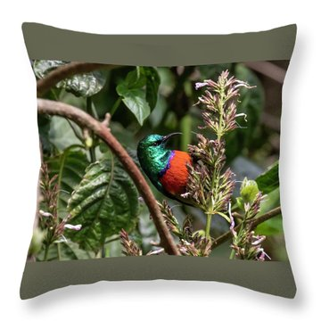 Northern Double-collared Sunbird Throw Pillow