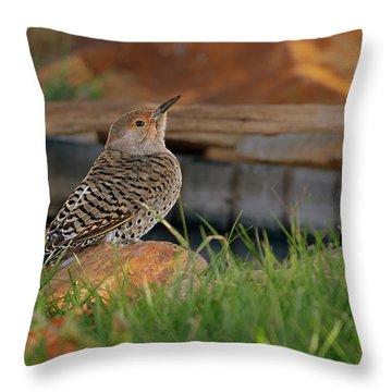 Northern Flicker Throw Pillow