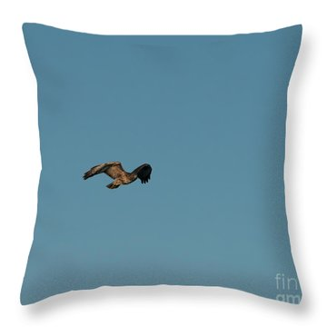 Throw Pillow featuring the photograph Northern Harrier In A Hurry by Jon Burch Photography