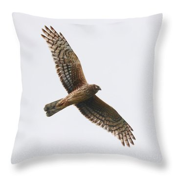 Northern Harrier In Flight Throw Pillow