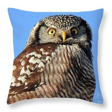 Northern Hawk-owl Throw Pillow