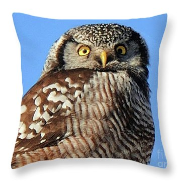 Northern Hawk-owl Throw Pillow
