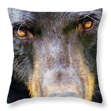 Nosy Bear Throw Pillow