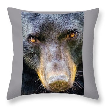 Nosy Bear Throw Pillow